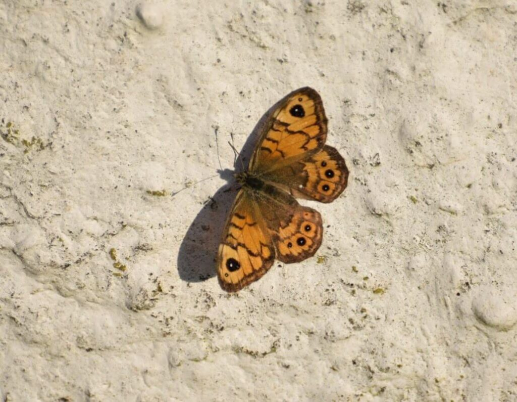 Butterfly sep 18_0